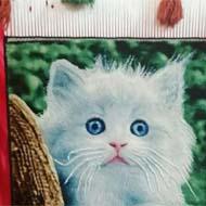 فروش تابلو فرش دستبافت طرح گربه