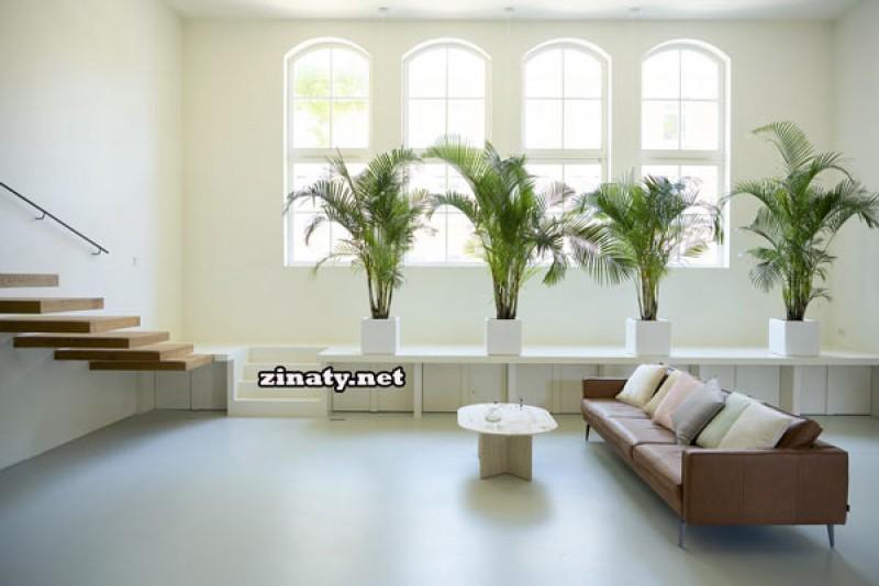 با بهترین گیاهان آپارتمانی لوکس و لاکچری آشنا شوید